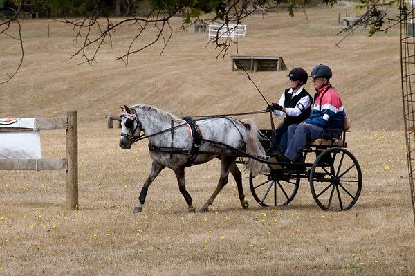 Victorian Carriage Driving Champs - Gallery 7