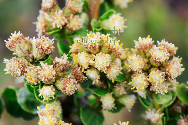 Restore Pt. Reyes Botany