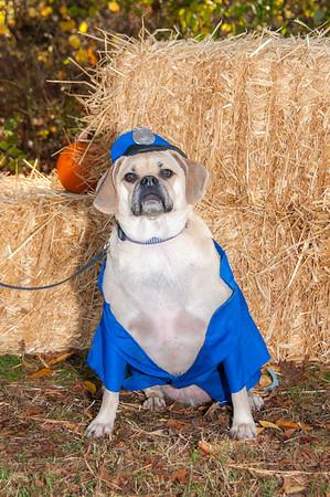 2014 11-02 Barrington Dog Park Event