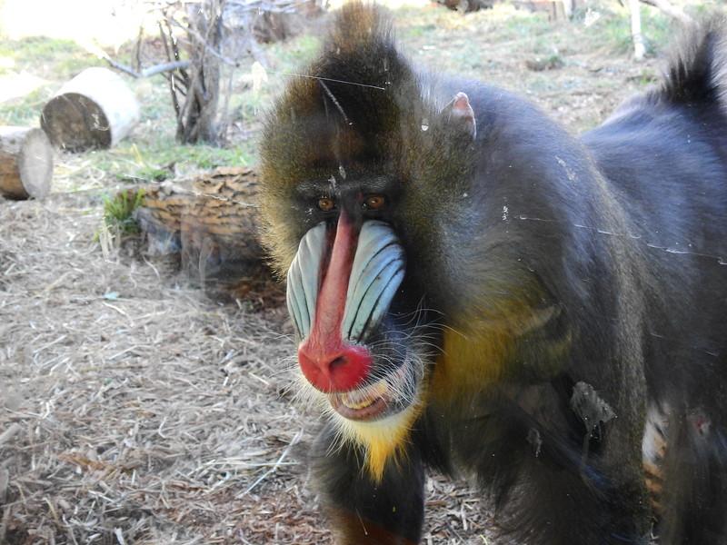 Denver Zoo 2018 (2621).JPG
