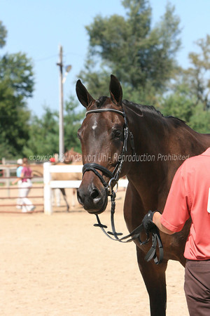 Sport Horse In-Hand Classes