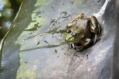 Reptiles, Amphibians & Snails