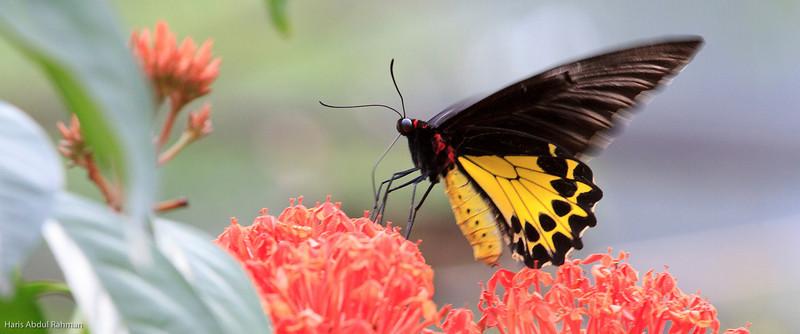 100606 KL Butterfly Park
