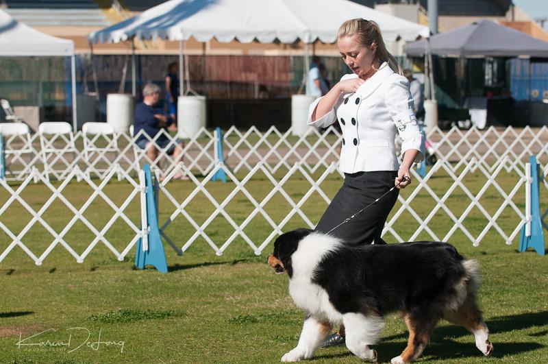 20170205_Australian Shepherds_Lost Dutchman Kennel Club-21.jpg