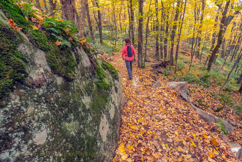 sentier  M 50  automne  couleurs