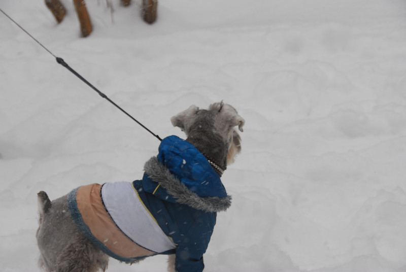 [20100103] 1st 2010 Snow in Beijing (84).JPG