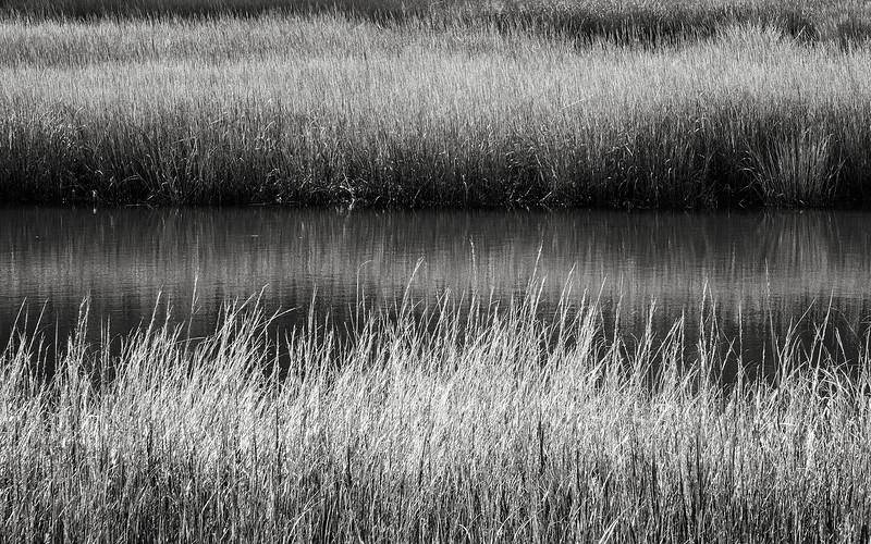 Caumsett State Park salt marsh