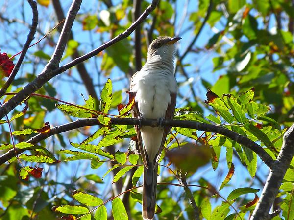 Birds October December 2011
