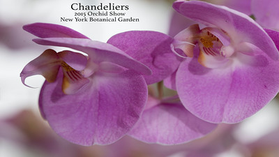 Chandeliers: 2015 Orchid Show NYBG