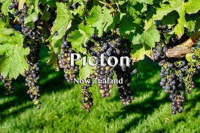 2019 03 02 | Picton