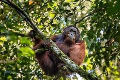 Komodo and Borneo 2017