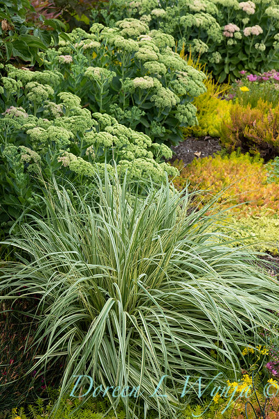 The Chartreuse Garden_1001.jpg