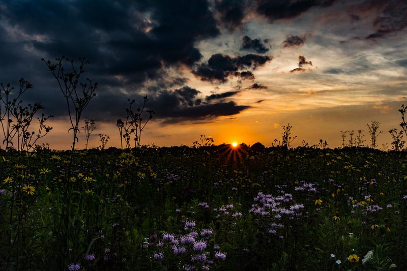 SFBog-sunset3-July.jpg