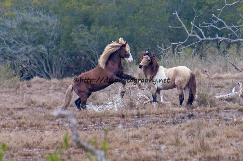 2020 Pony Spotting