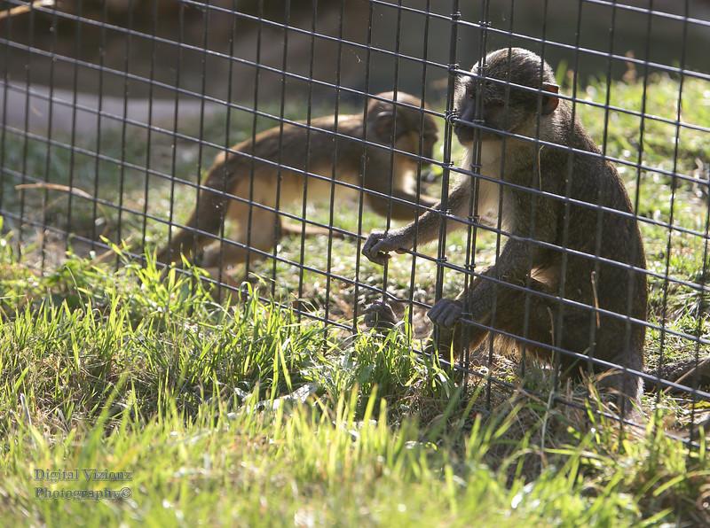 2016-07-17 Fort Wayne Zoo 061LR.jpg