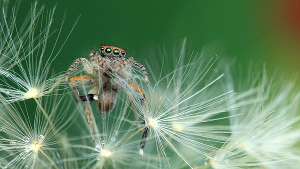 Spiders - Araignées