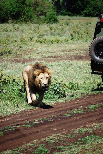 Ngorongoro (131).JPG