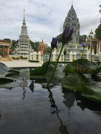 MOM-Cambodia 2016