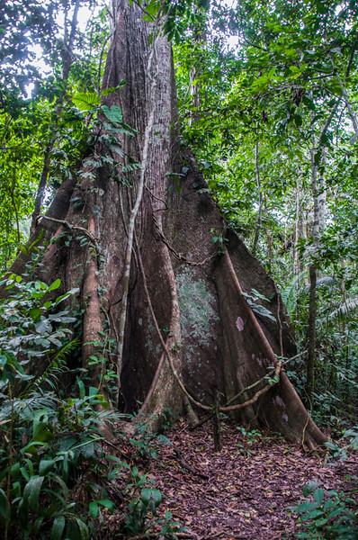 Amazon_Trees07.jpg