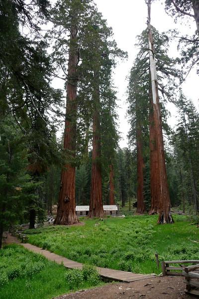 Museum. Mariposa Grove, Yosemite NP