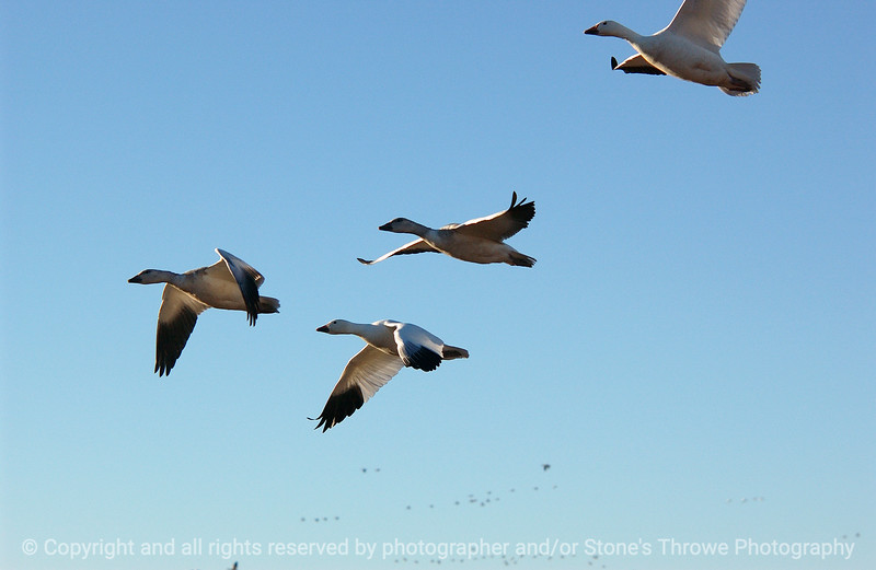 birds-bosque_del_apache_nm-01dec06-3084