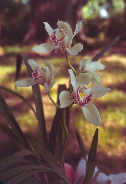 1977 05 birthday orchid 2.jpg