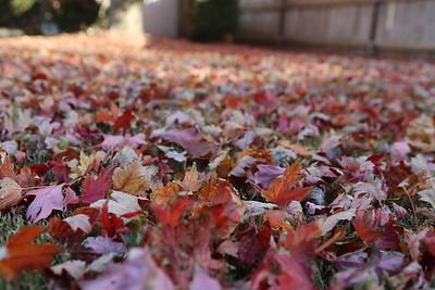 171110 Fall leaves