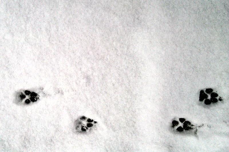snow-dog-walk-6.jpg