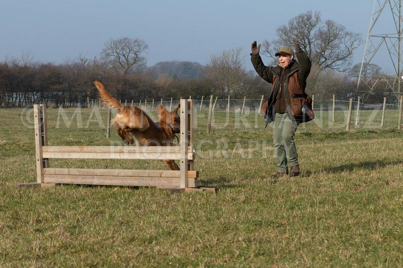 Dog Training Novice GD Feb2019-5966.jpg