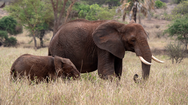 Tanzania-Tarangire-National-Park-Safari-Elephant-13.jpg