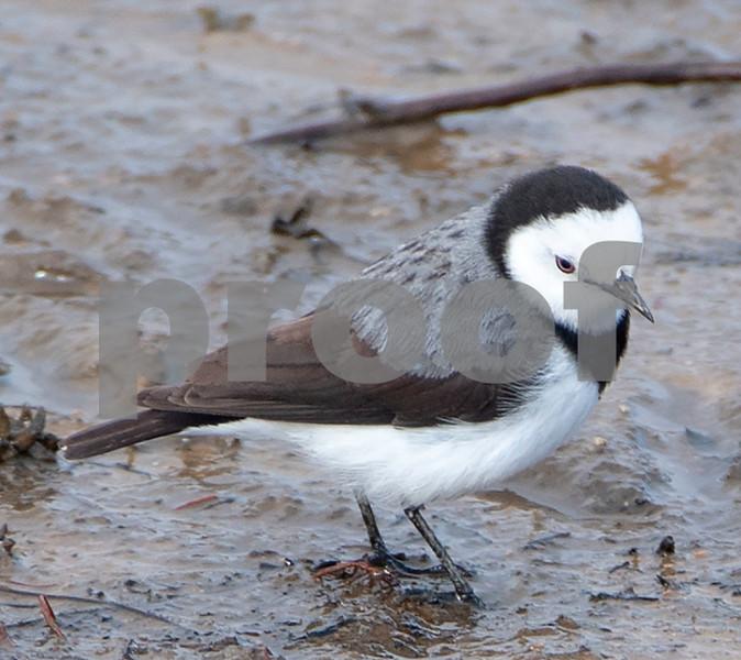 Creel bay bird 3.jpg
