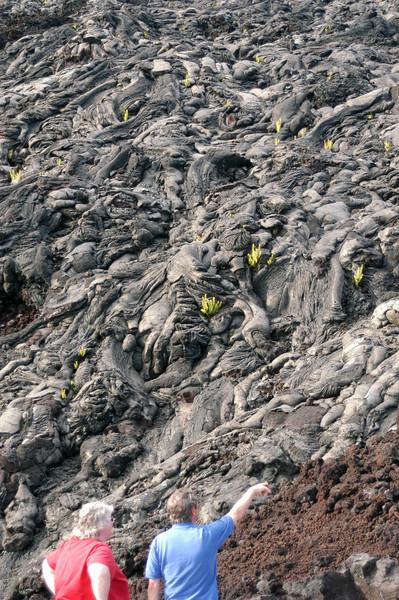 258- 20080412- Hawaii 15- Volcano Nat'l Park DSC_3125.jpg