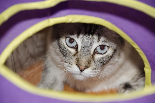 Abacherli-Cats