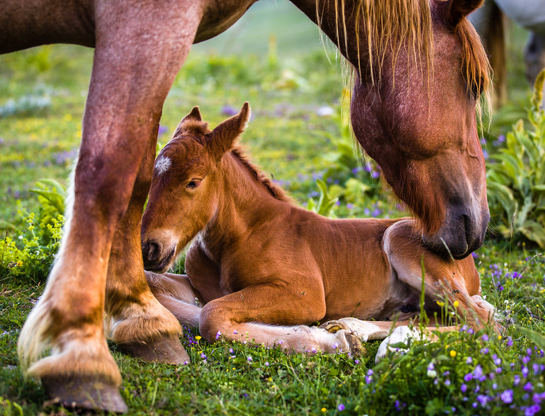 Mother with baby horse
