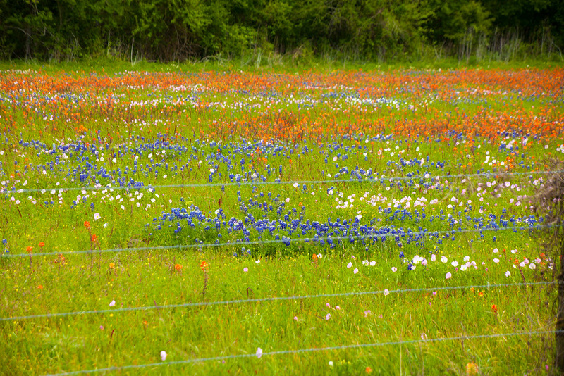 2016_4_9 Texas Wildflower Shoot-8431.jpg