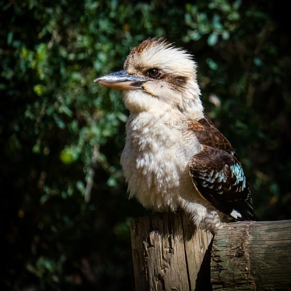 011119 birds  _5.JPG