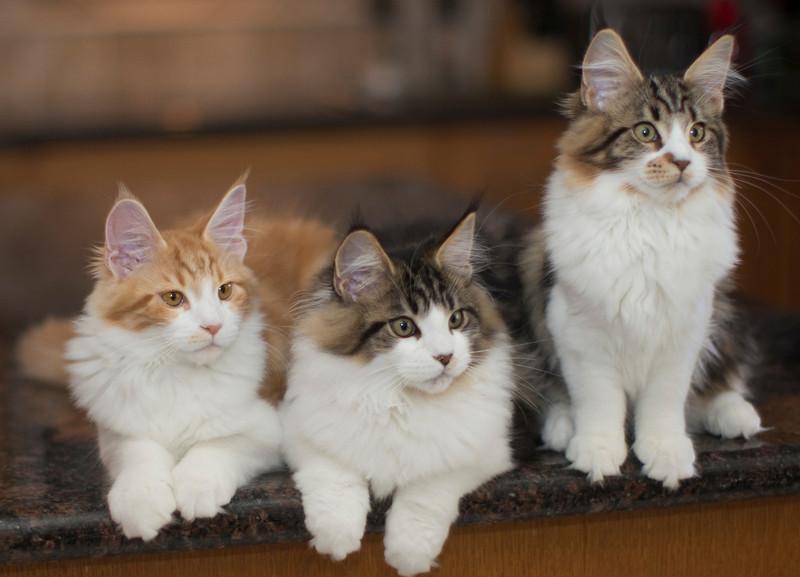 Kittens292.jpg