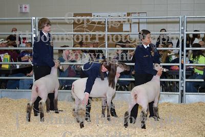 2013 Klein ISD Lamb Show Class 1