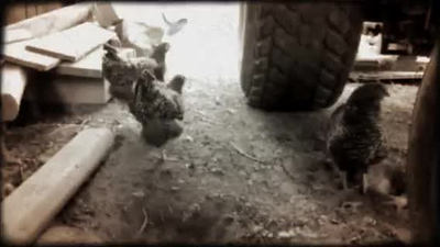 66500689_The Chickens of Stagville.mp4