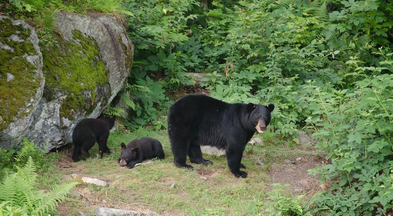 Black Bear-17-2.jpg