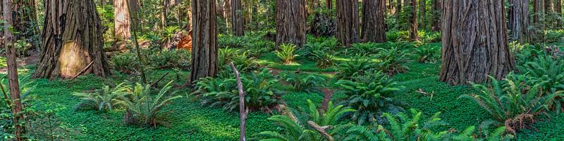 Redwoods Ultrawide