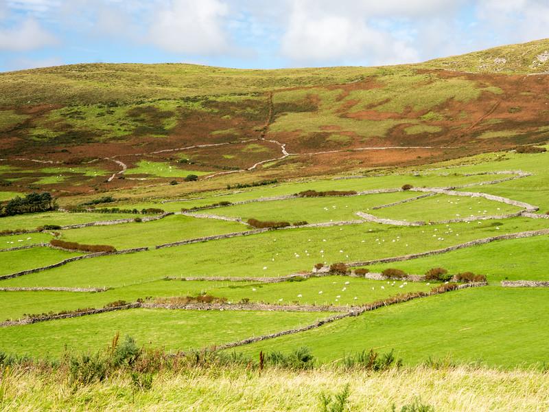 Kerry fields