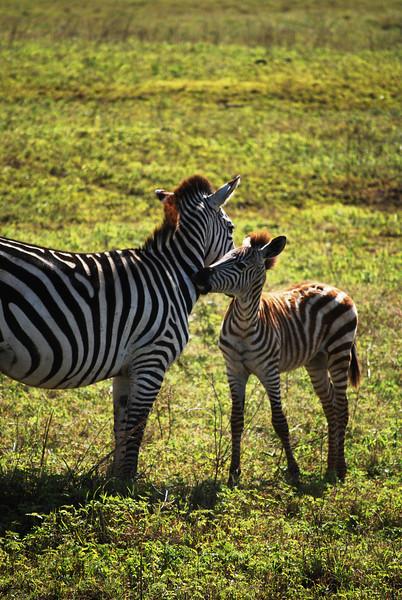 Ngorongoro (48).JPG