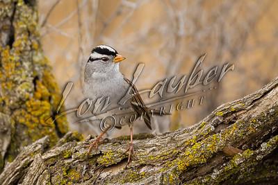 08250 Birds, passerines
