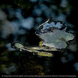 015-leaf_floating-wdsm-18oct16-12x12-006-6379