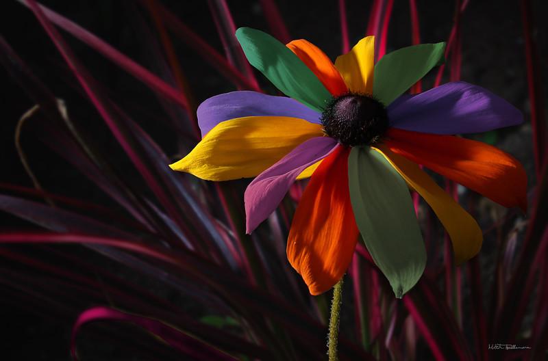 multicolored.jpg