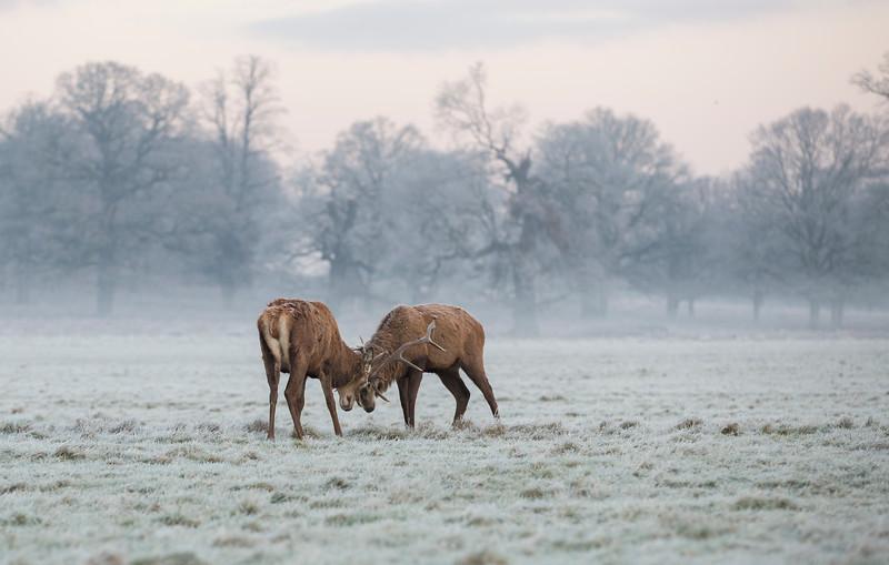 Fight in the Frost.jpg