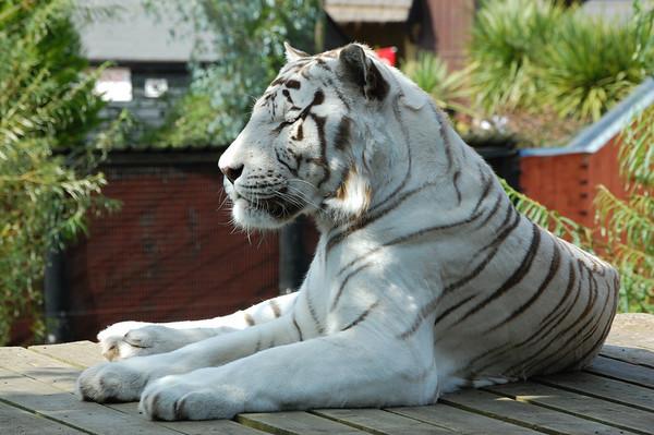 Colchester Zoo - September 2009