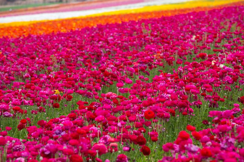 Spring Flowers B-375.jpg