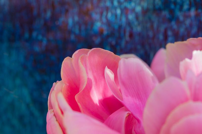 FineArt_Flowers_051520_0676.jpg